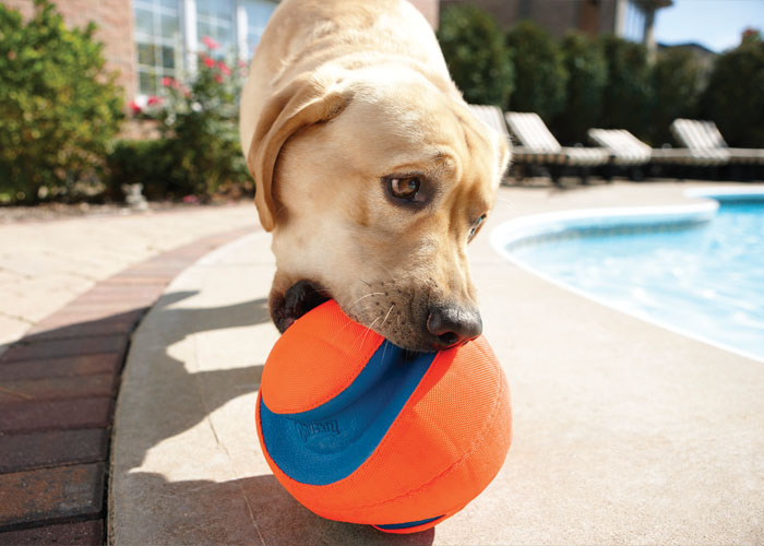 How to Choose Safe Toys for Your Dog