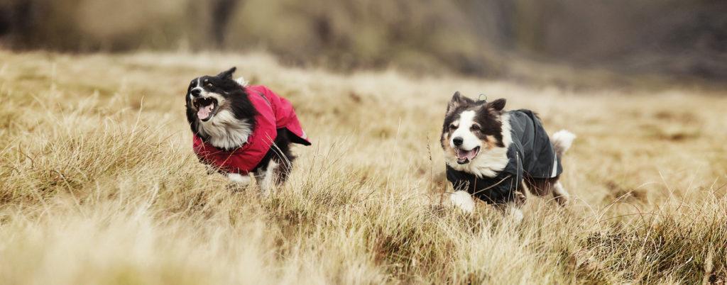 Dogs running through fields