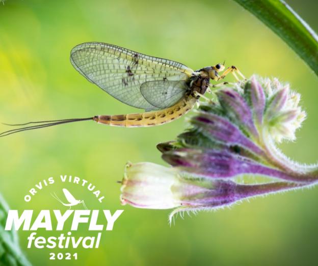 Orvis Virtual Mayfly festival 2021