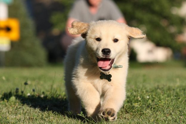 Orvis We Love Dogs Children's Activity Pack